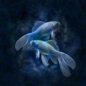 12_pesci