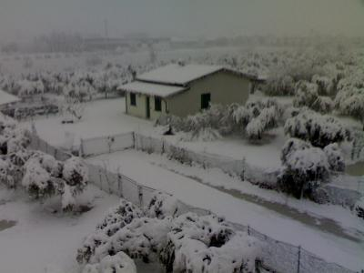 Emergenza neve e i giardini di Marzo