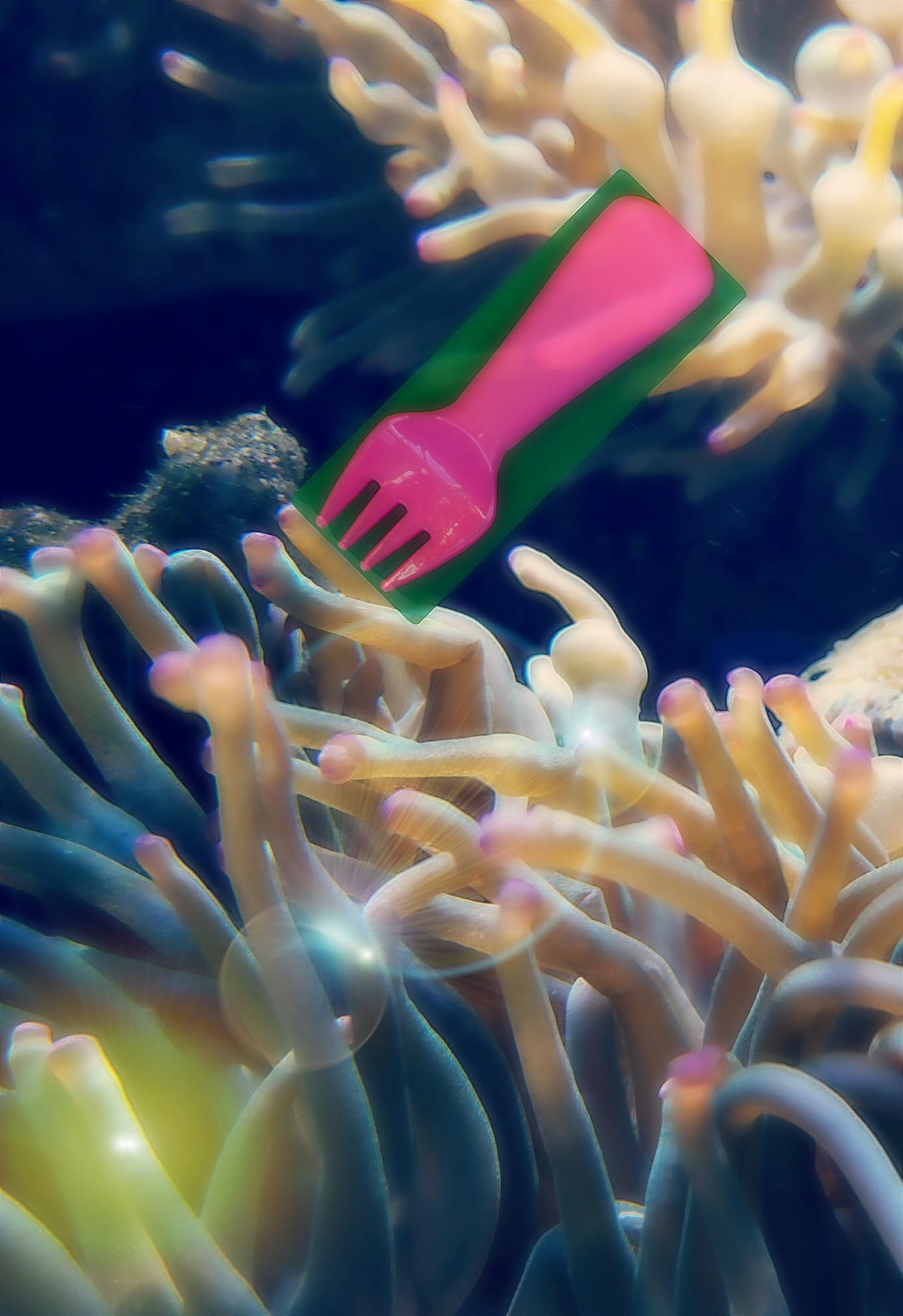 Il segreto dei coralli!