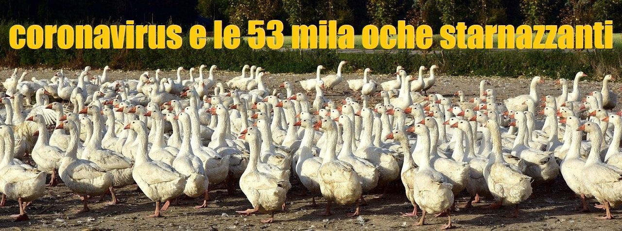 53mila oche strarnazzanti, denunciate a piede libero.